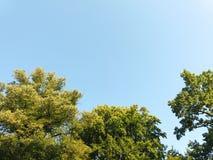 Träd och en blå morgonhimmel Arkivfoto