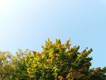 Träd och en blå morgonhimmel Arkivfoton