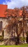 Träd och en gammal byggnad Royaltyfria Bilder