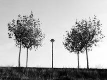 Träd och en lyktstolpe i laGalea Arkivbild