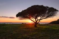 Träd och en solnedgång, Tarifa, Spanien Arkivbilder