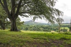 Träd och ett berglandskap på bakgrunden i Irland Fotografering för Bildbyråer