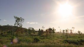 Träd och ett gräs- fält lager videofilmer