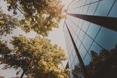 Träd och exponeringsglas Royaltyfri Foto