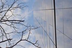 Träd och exponeringsglas upp Royaltyfri Fotografi