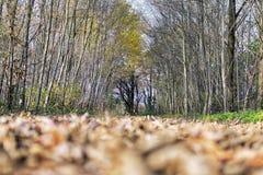 Träd och fält i höst Arkivfoto