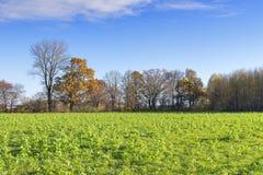 Träd och fält i höst Arkivbild