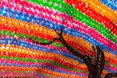 Träd och färgrika pappers- lyktor på den Jogyesa templet Royaltyfri Bild