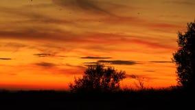 Träd och fåglar på den röda solnedgången för apelsinadn Arkivfoton