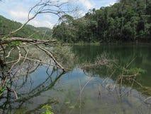 Träd och fördärvar på sjön Fotografering för Bildbyråer