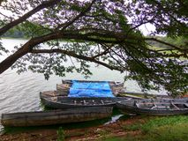 Träd och fartyg i vatten Arkivfoton