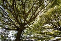 Träd och filialdagsljus Royaltyfri Fotografi