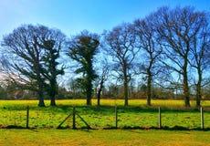 Träd och filialer mot den blåa himlen Royaltyfria Foton