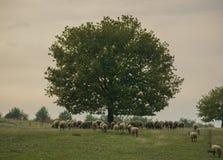 Träd och flock royaltyfri bild