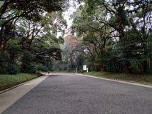 Träd och gångbana arkivbilder