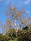 Träd och gömma i handflatan Arkivfoto