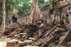 Träd och gallerier i templet för Ta Prohm, Cambodja royaltyfri foto