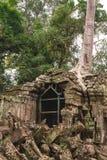 Träd och gallerier i templet för Ta Prohm, Cambodja royaltyfria bilder