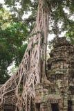 Träd och gallerier i templet för Ta Prohm, Cambodja royaltyfri fotografi