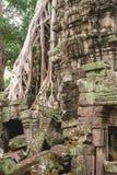 Träd och gallerier i templet för Ta Prohm, Cambodja fotografering för bildbyråer