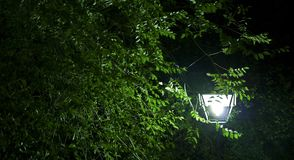 Träd- och gataljus royaltyfri bild