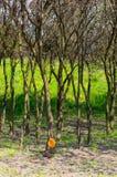 Träd och gräs arkivbild