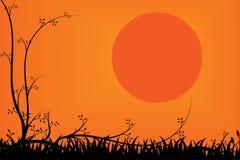 Träd och gräs för solnedgångbakgrund Royaltyfri Foto