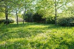 Träd och gräs i trädgård arkivfoto