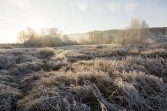 Träd och gräs med rimfrost på en iskall vintermorgon Royaltyfria Foton