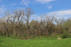 Träd och gräs och blå himmel Arkivfoto