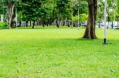 Träd- och gräsbakgrund i middag royaltyfria foton