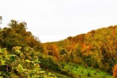 Träd och gräsplan för höst orange Arkivbild