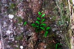 Träd och gräsplanblad i skogen Royaltyfri Foto
