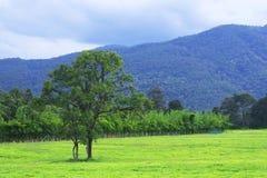 Träd och grässlätt Royaltyfria Bilder