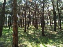 Träd och grön miljö royaltyfria foton