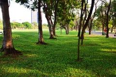 Träd och gröna gräsmattor i parkerar royaltyfri fotografi