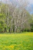 Träd och grönt gräs arkivbild