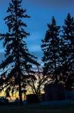 Träd och gravkonturer Fotografering för Bildbyråer