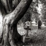 Träd och gravstenar Arkivfoto