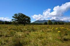 Träd och gulingfält royaltyfria bilder