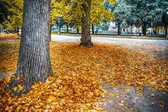 Träd och gulingsidor i en stads- fyrkant Royaltyfri Foto