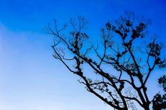 Träd och härlig blå himmel Arkivfoton