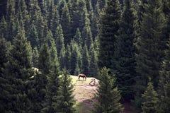 Träd och häst Royaltyfri Bild