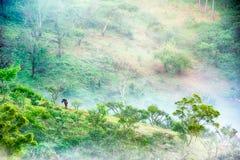 Träd och häst i mist på Doi angkhang Thailand Royaltyfri Fotografi