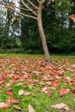 Träd och höstfärger Arkivfoto