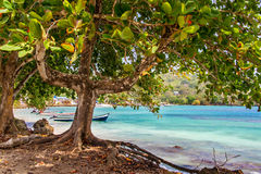 Träd och hav Royaltyfri Foto