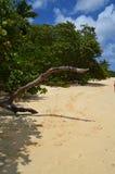 Träd och hav 3 Arkivfoton