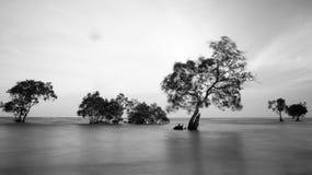 Träd och hav i långt exponeringsskott arkivfoto