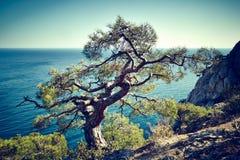 Träd och hav på solnedgången naken sky för blå crimea kullliggande arkivbild