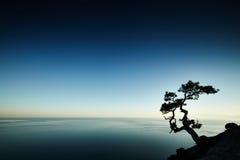 Träd och hav på solnedgången naken sky för blå crimea kullliggande fotografering för bildbyråer